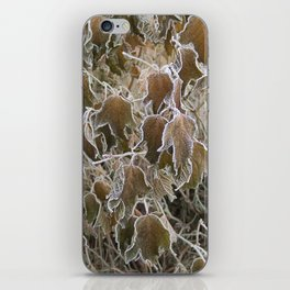 Frosty Leaves iPhone Skin