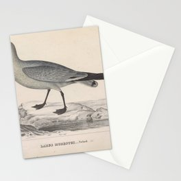Grey Gull, larus modestus25 Stationery Cards