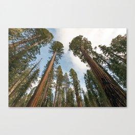 Redwood Sky - Giant Sequoia Trees Canvas Print