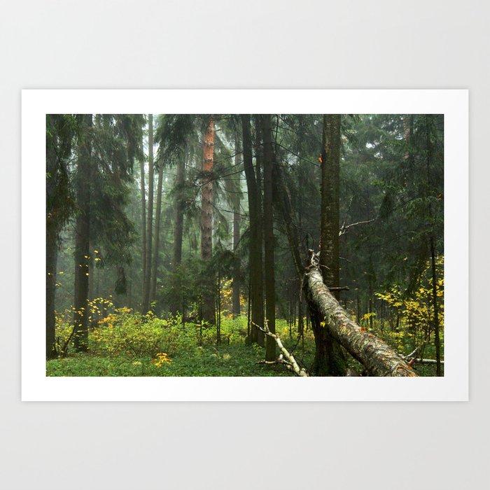 Forest#4 Art Print