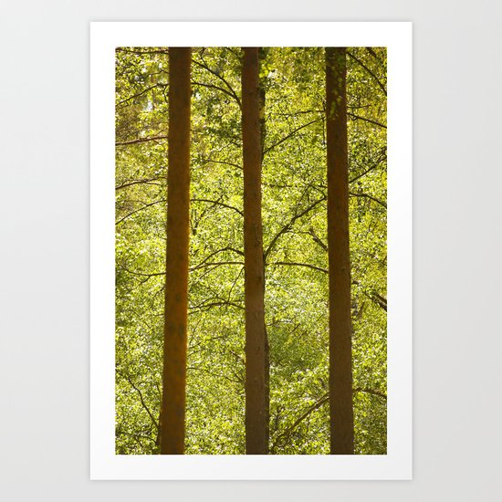 Three Tree Trunks  Art Print
