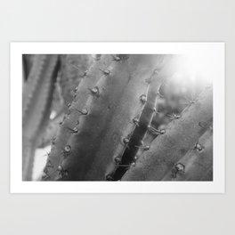 Kaktus #4 / b&w Art Print