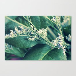 Buds & Leaves Canvas Print