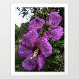 Hibiscus Flowering Shrub Art Print