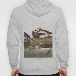 Long tailed duck, Birds of America, Audubon Plate 312 Hoody