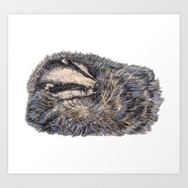 Sleeping Badger Art Print