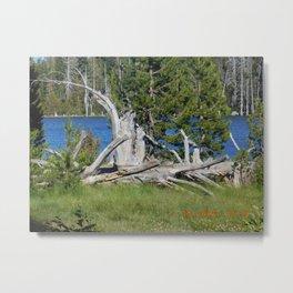 road trip, wood pile, lake, grass, snag Metal Print
