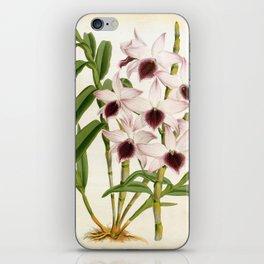 Dendrobrium Ainsworth Roseum Vintage Lindenia Orchid iPhone Skin