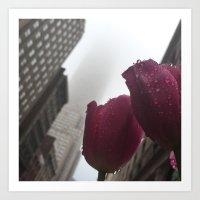 Empire Tulip Art Print