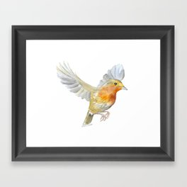 Robin in Flight Watercolor Framed Art Print