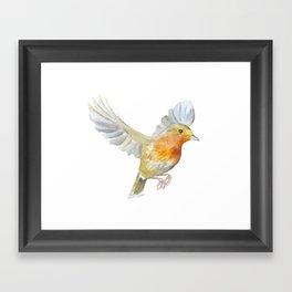 Robin in Flight Watercolor Framed Art Print
