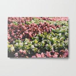 Central park flowers flowerbed surface Metal Print