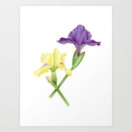 Watercolor irises Art Print