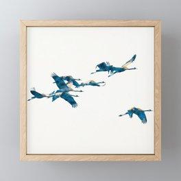Beautiful Cranes in white background Framed Mini Art Print