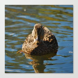 Mother Mallard  Canvas Print