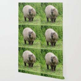 So cute capybara Wallpaper