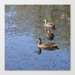Ducks on a pond Canvas Print