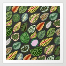 Prayer Plant Calathea Leaves 1 Art Print