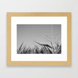 Corn Top Framed Art Print