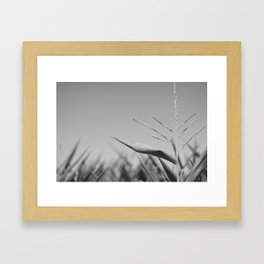 Corn Top Framed Art Print