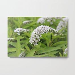 Breezy Flowers Metal Print