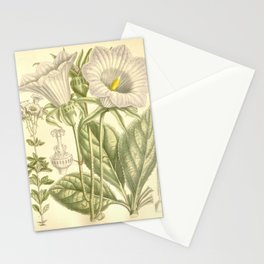 Flower 7472 ostrowskia magnifica Stationery Cards