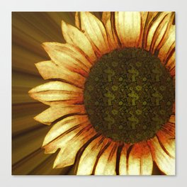 My Sun Sunflower Print Canvas Print