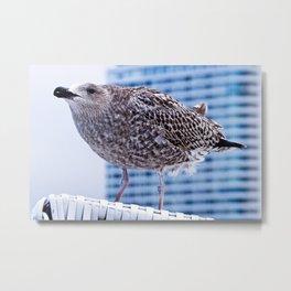 BAY WATCH - Seagull of Baltic Sea Metal Print