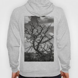 Ancient Tree, Survivor, Alive Hoody