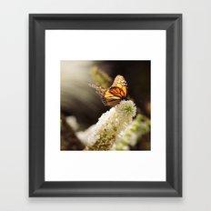 Butterfly Sunshine Framed Art Print