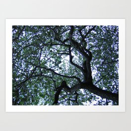 Up Through the Tree Art Print