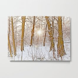 Sunshine in the snowy forest Metal Print