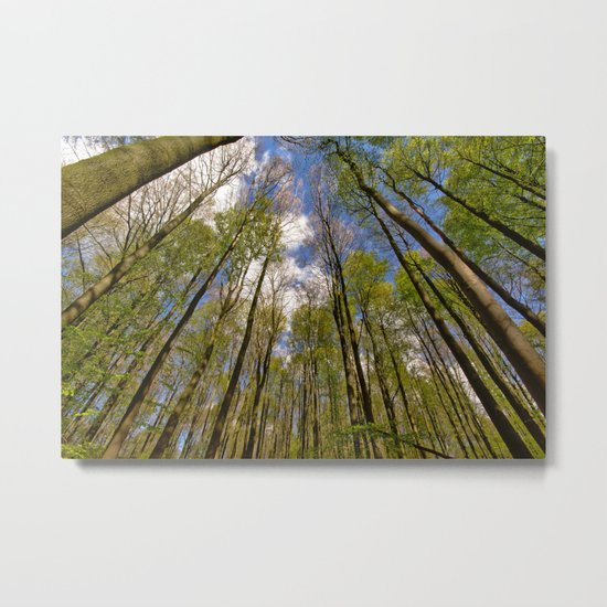 looking up to the trees in the forest Metal Print