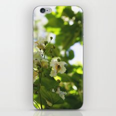 Flowers in the forest iPhone Skin