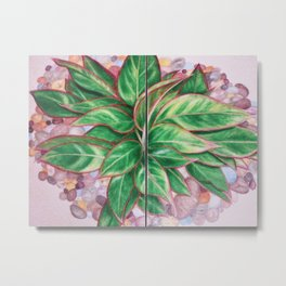 The Chinese Evergreen Metal Print