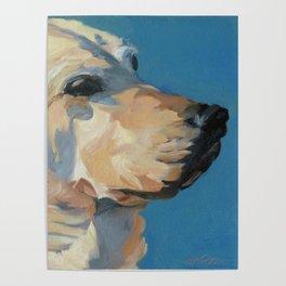 Mandy the Golden Labrador Poster