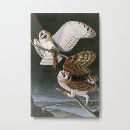 Barn Owls, the Birds of America by John James Audubon Metal Print
