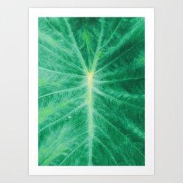 Colocasia Esculenta Art Print