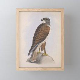Ferruginous Hawk Framed Mini Art Print