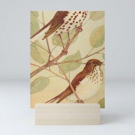 Vintage Print - Wood Thrush & Veery Mini Art Print