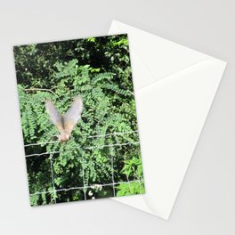 Mourning Dove on Takeoff Stationery Cards