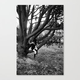 Resting On The Tree Canvas Print