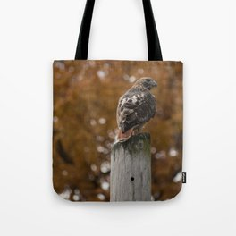 Red Tailed Hawk Fall Tote Bag