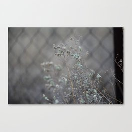 Flowers & wire Canvas Print