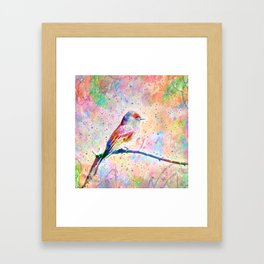 Flashy Phoebe - Black Phoebe Bird Framed Art Print