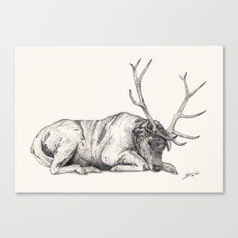 Stag // Graphite Canvas Print