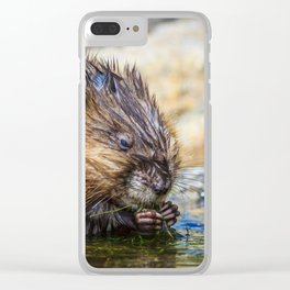 A Muskrat Feeding in the Dillon Reservoir, Colorado Clear iPhone Case