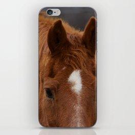 Red - The Auburn Horse iPhone Skin