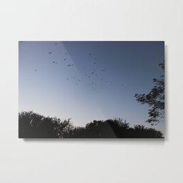 Birds Flying High Metal Print
