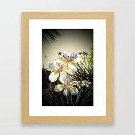 African White Iris DPGP160719a Framed Art Print